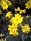 Lukeの傍らに咲く「黄色」