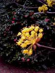 モノクロームな駒沢公園の色々